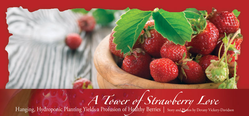 Young strawberry girl magazine