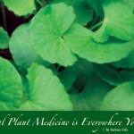 Natural Plant Medicine