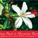 Getting Back to Hawaiian Roots