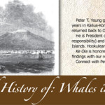 A brief history of whales by Peter T Young