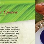 Guava Local Ag