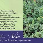 h2015-4-healing-plants-akia