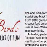 festival-of-birds
