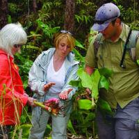 Visitors sometimes volunteer to help preserve natural sites. In Volcanoes National Park, a nature tour company, Hawai'i Forest and Trail, invites tour guests to participate in helping remove invasive kahili ginger plants from the park.