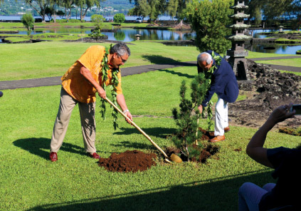 Hawai'i County Mayor Billy Kenoi, left, and Mayor Michihiro Takeuchi of Sumoto City, Japan, plant a black pine tree in Lili'uokalani Gardens in 2015 to commemorate the 15th anniversary of the sister city pact between the two municipalities. photo by T. Ilihia Gionson