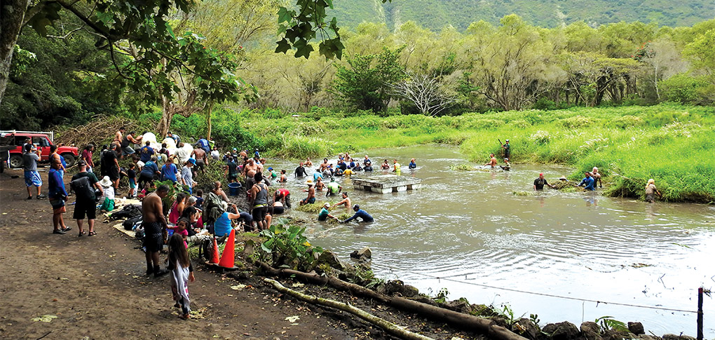 Volunteers help to clear Lālākea Fishpond. photo courtesy of the Hawaiian Cultural Center of Hāmākua