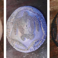 Right: stage 1 of 'opihi shell carving by Wil Costa.  Middle: stage 2–3 Honu 'opihi shell. Left: final stage Honu 'opihi shell.
