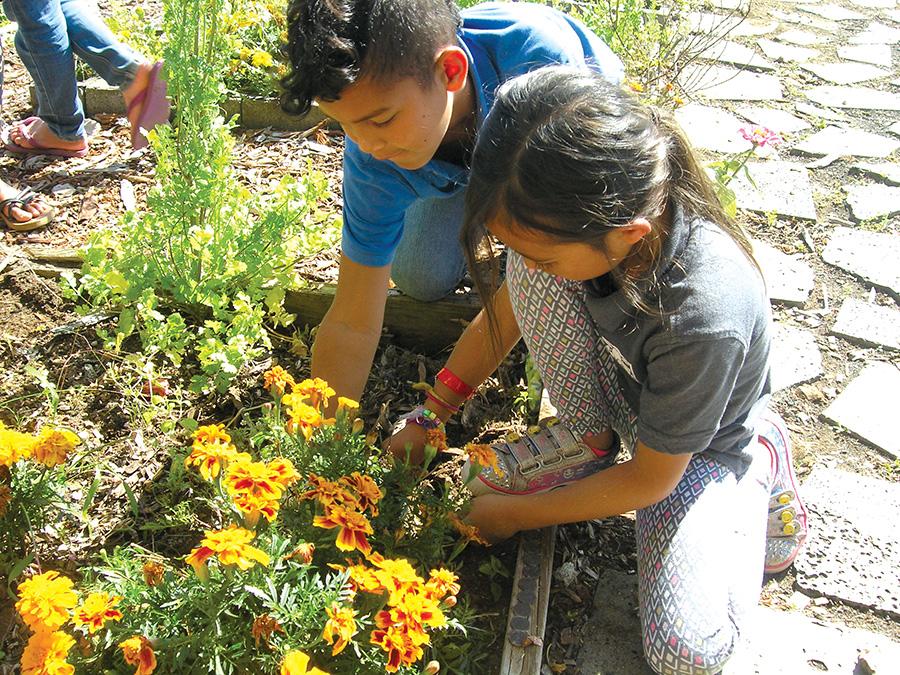 Kanu O Ka U0027Āina Second Graders Collecting Seeds And Exploring. Photo By Jan  Wizinowich
