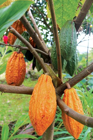Tropical Edibles: Dreaming of an Island Eden
